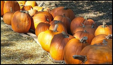 pumpkin patch3
