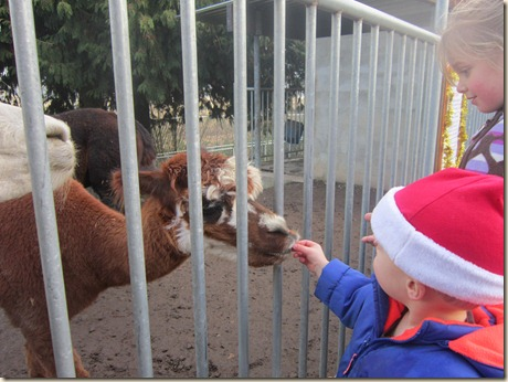 12-23 Reindeer Fesitival 094