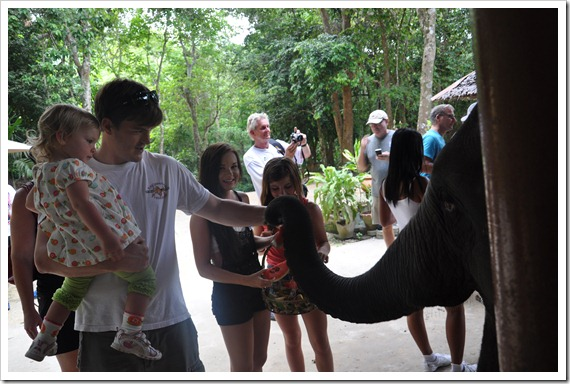 Feed Elephants