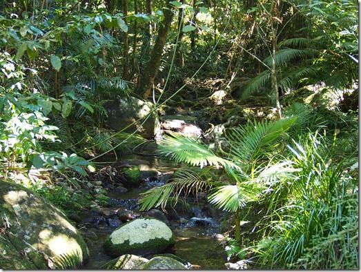Mossman Gorge 8