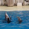 Boudewijn Seapark-042.JPG