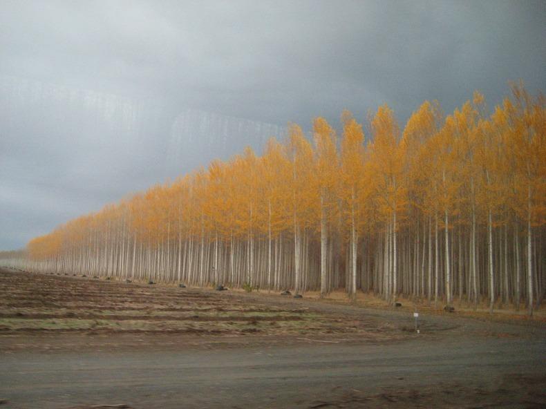 boardman-tree-farm-7