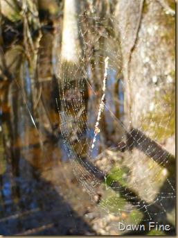 Beidler Forest_083