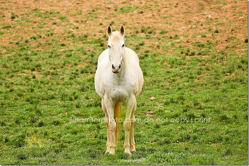 horses-5507