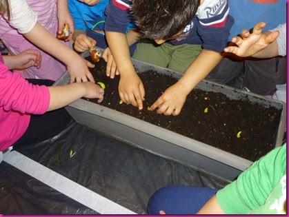 Piantiamo i bulbi alla Scuola Infanzia Padulle  - 25 marzo 2015(35)