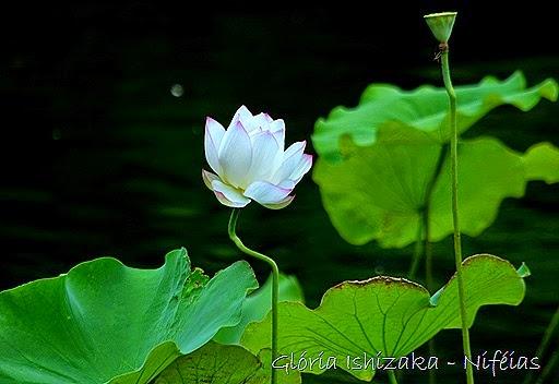 Glória Ishizaka - flores 76