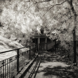 Kingsmead Path by Dan Horton-Szar ARPS - City,  Street & Park  Street Scenes ( urban, monochrome, tree, canterbury, black and white, infrared, kent, street, path )