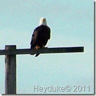 2011-11-12 Merritt Island NWR 004