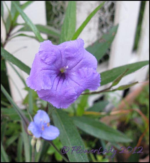 03-01-phil-violet