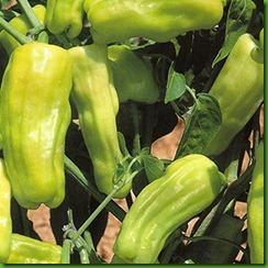 Pepper Stavros