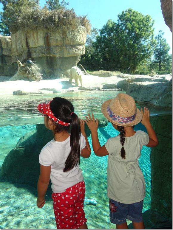 SD Zoo 038