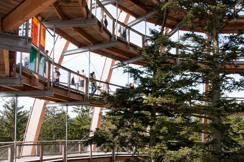 bavaria-treetop-walk-5