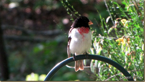 spring birds_045