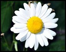 03g5 - Knight Trail - flowers