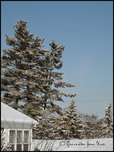 Snow, Winter Wonderland (34)