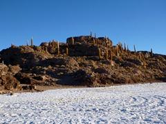 Isla Incahuasi on the Salar de Uyuni.