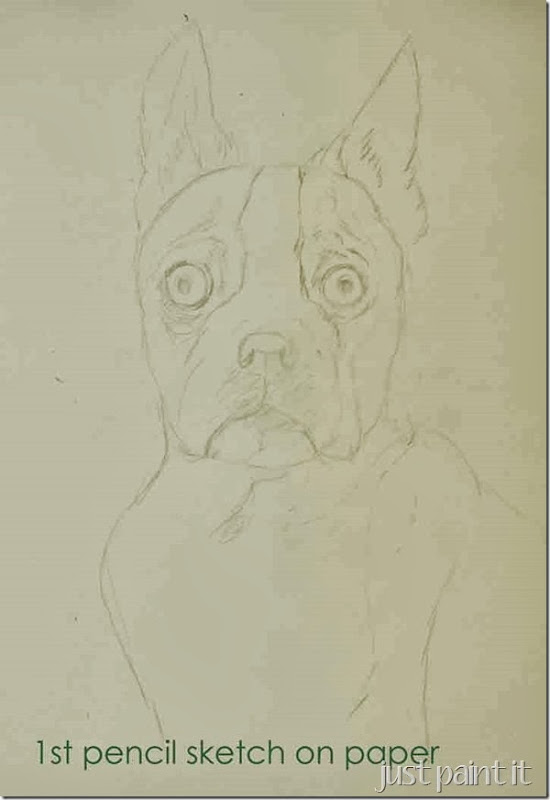 boston-terrier-sketch-A