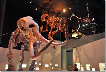 Houston Museum of Natural Science (4)