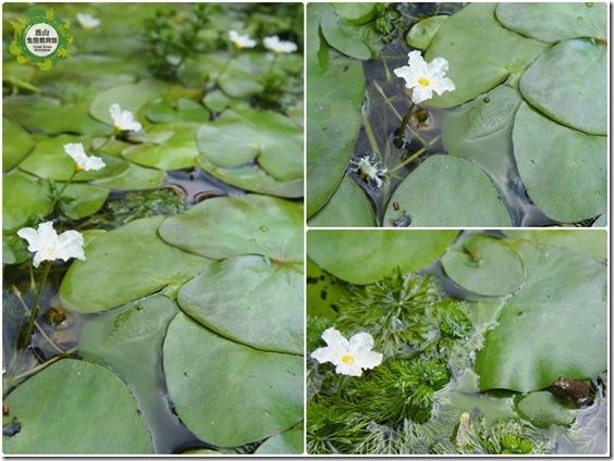 小白花的季節 (2)