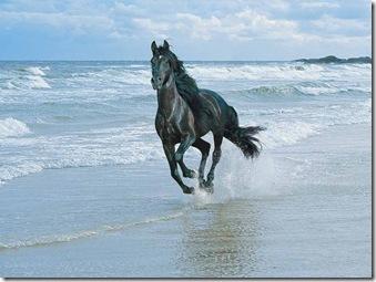حصان في البحر