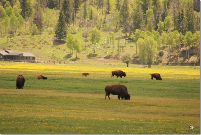 06-07-13 A Elk Ranch Flats (6)