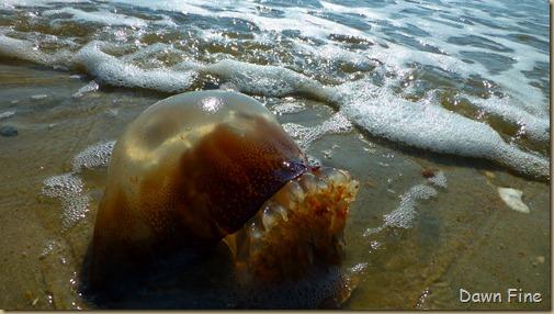 edisto beach_039