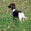Honden » Ici-Ixina Van de Chesannehof