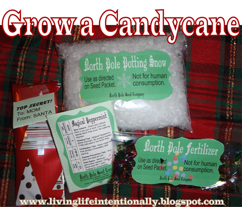 Grow a Candy Cane Christmas Activity for Kids