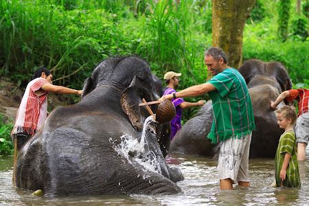 Distractie Thailanda: spalarea in rau a elefantilor