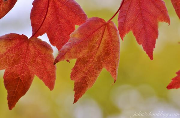 Foliage3