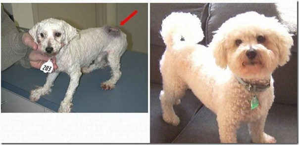 Animais Antes e Depois do Resgate (21)