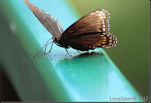 CF_Autumn_Butterfly