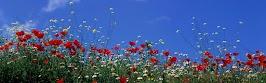 flower panoram_nebesnoe.info_04.jpg