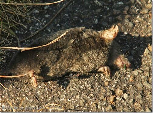 15-dead-mole