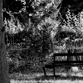 a shady spot by Trace Fleming - City,  Street & Park  City Parks ( black and white, b&w, landscape )