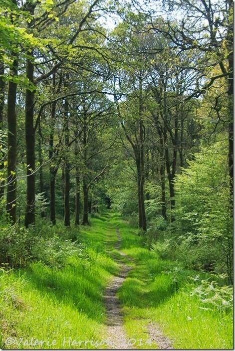 21-woodland-path