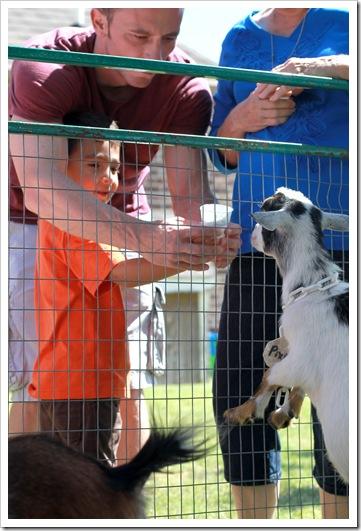 petting zoo IMG_9481
