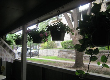 Patio Hanging Baskets