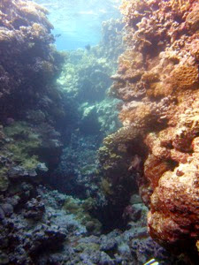 El M Coral Channel