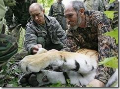 Putin and tiger