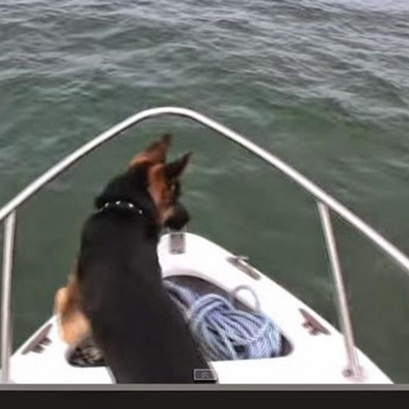 Σκύλος κάνει άλματα με  τα δελφίνια