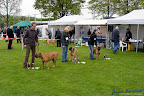 20100513-Bullmastiff-Clubmatch_30931.jpg