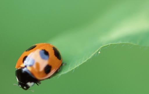 Ladybug on water