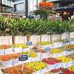 _Цветочный рынок, Амстердам_Alena Malinka.jpg
