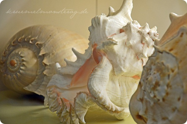 Wremen 20zwölf Tag 5 Muschelmuseum (13)