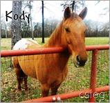 Kody (1)
