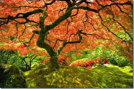 autumn-colors-fall-002