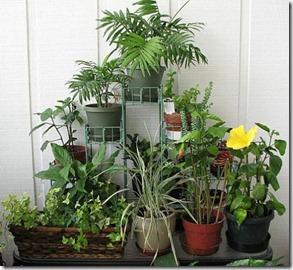 indoor-gardening-ideas