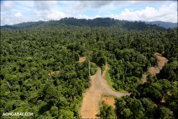 Logging operation in Malaysian Borneo. Photo: mongabay.com