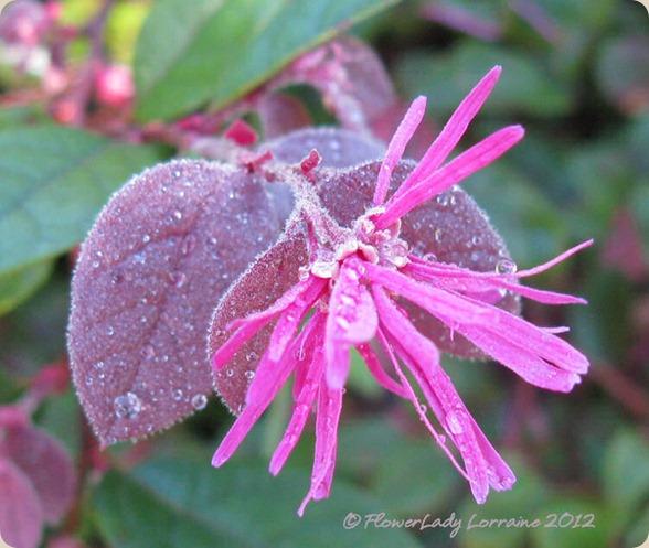 07-06-fringe-flower